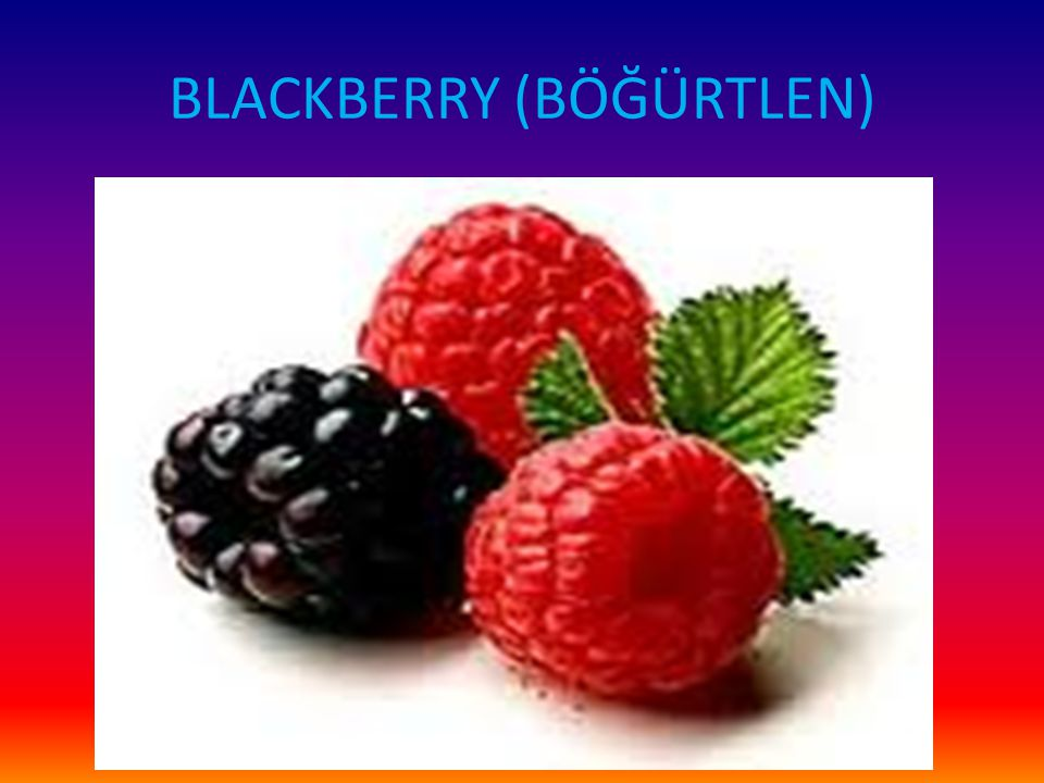 BLACKBERRY (BÖĞÜRTLEN)