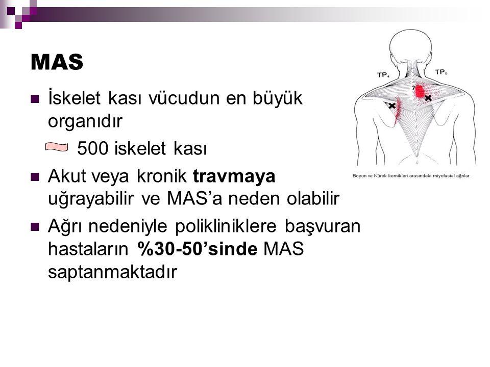 MAS İskelet kası vücudun en büyük organıdır 500 iskelet kası