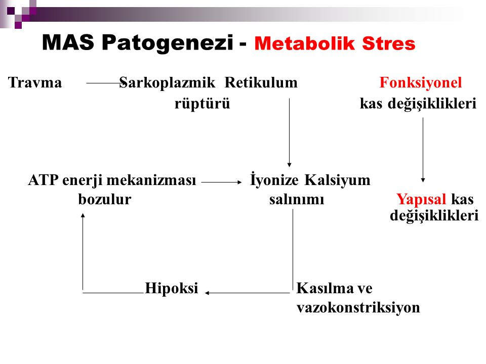 MAS Patogenezi - Metabolik Stres