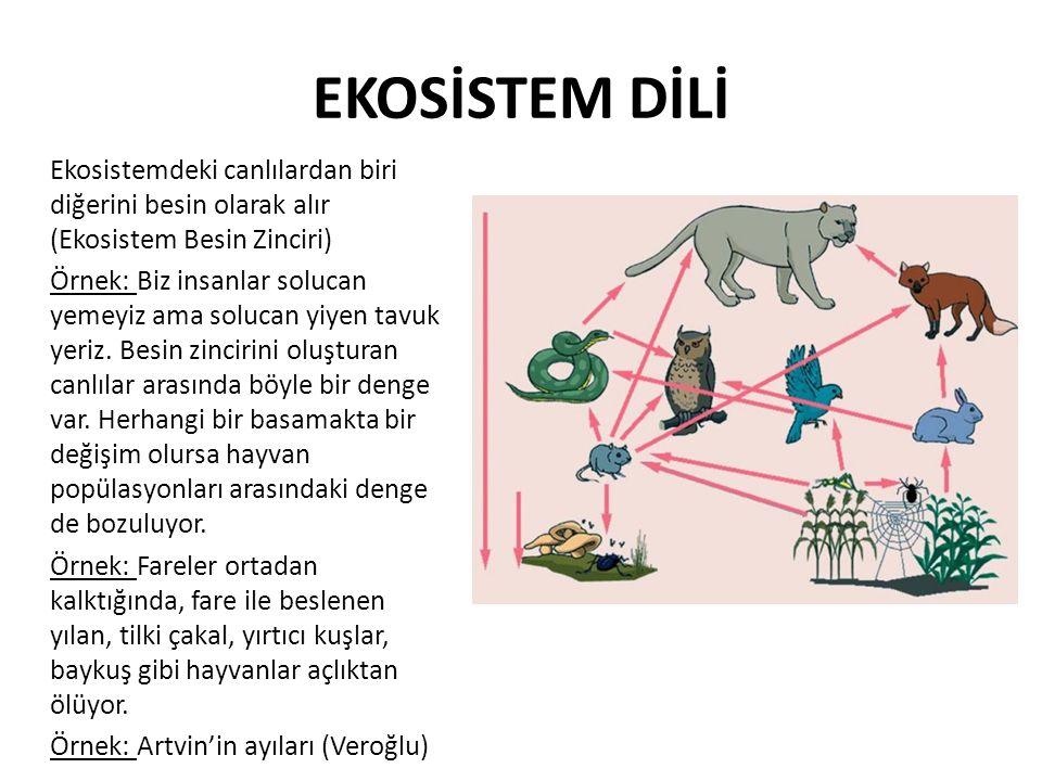 EKOSİSTEM DİLİ Ekosistemdeki canlılardan biri diğerini besin olarak alır (Ekosistem Besin Zinciri)