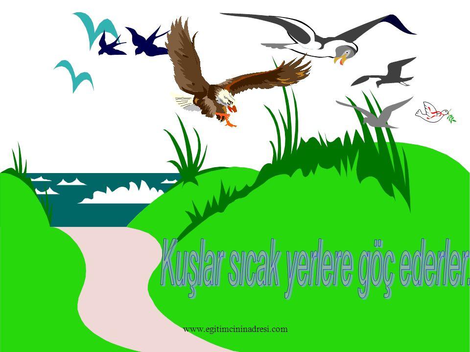 Kuşlar sıcak yerlere göç ederler.