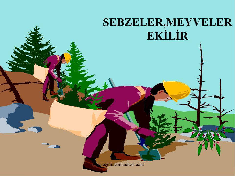 SEBZELER,MEYVELER EKİLİR