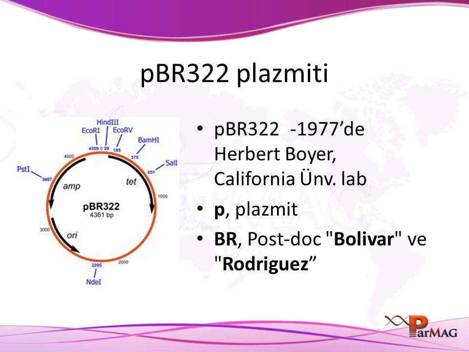 pBR322 plazmiti pBR322 -1977'de Herbert Boyer, California Ünv. lab