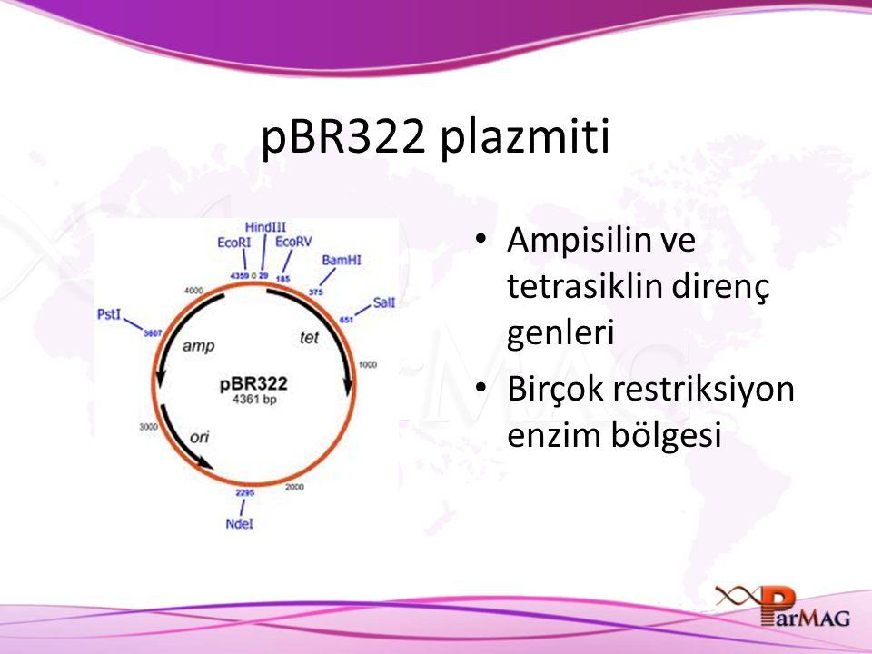 pBR322 plazmiti Ampisilin ve tetrasiklin direnç genleri