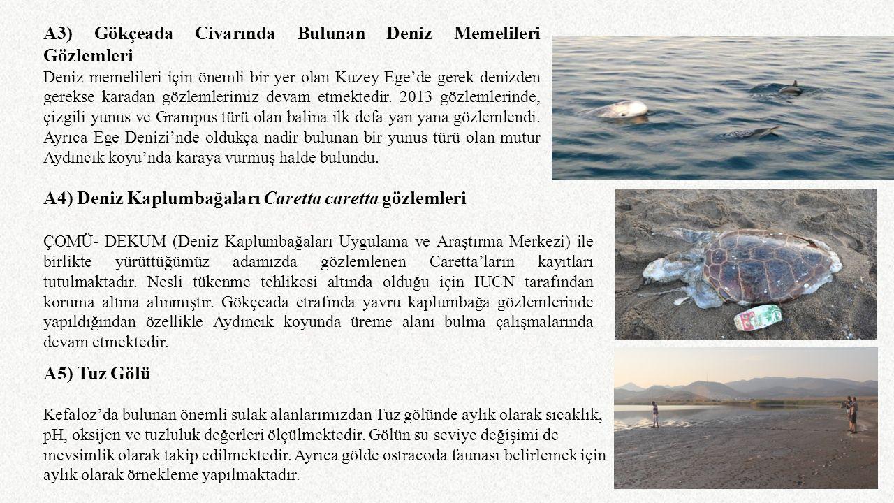 A3) Gökçeada Civarında Bulunan Deniz Memelileri Gözlemleri