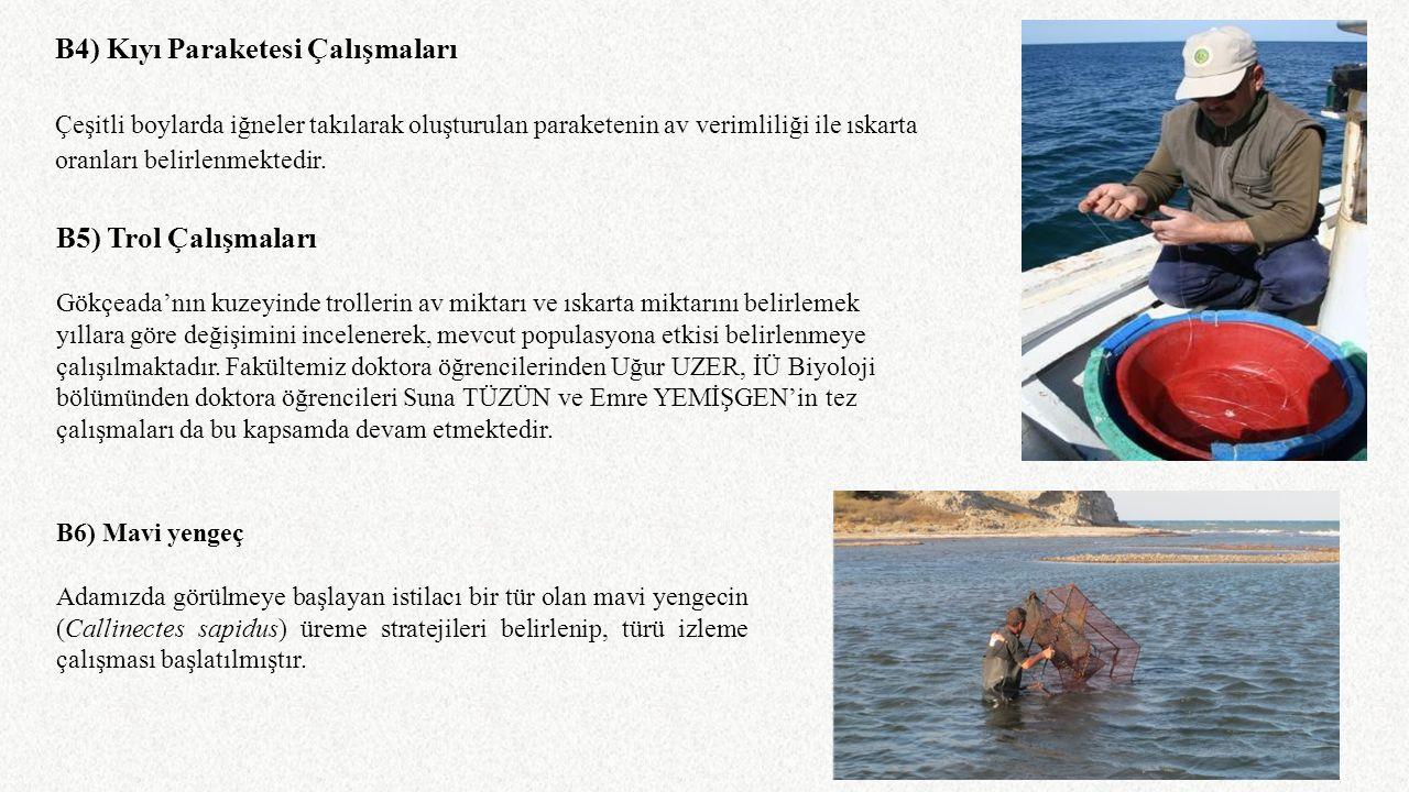 B4) Kıyı Paraketesi Çalışmaları