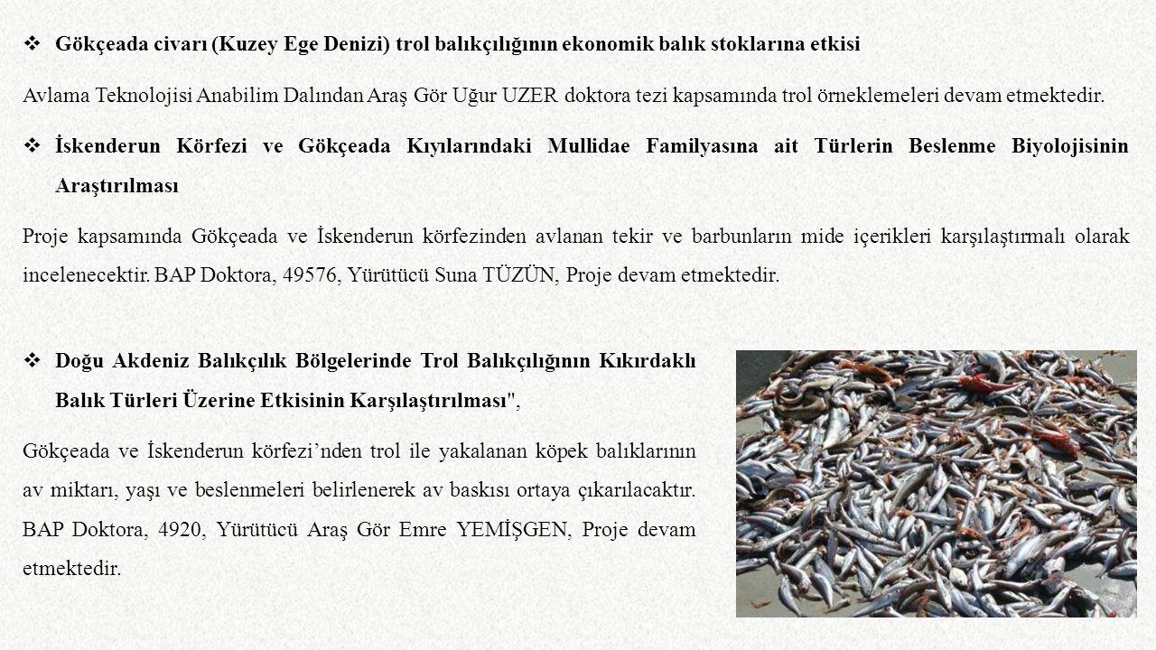 Gökçeada civarı (Kuzey Ege Denizi) trol balıkçılığının ekonomik balık stoklarına etkisi