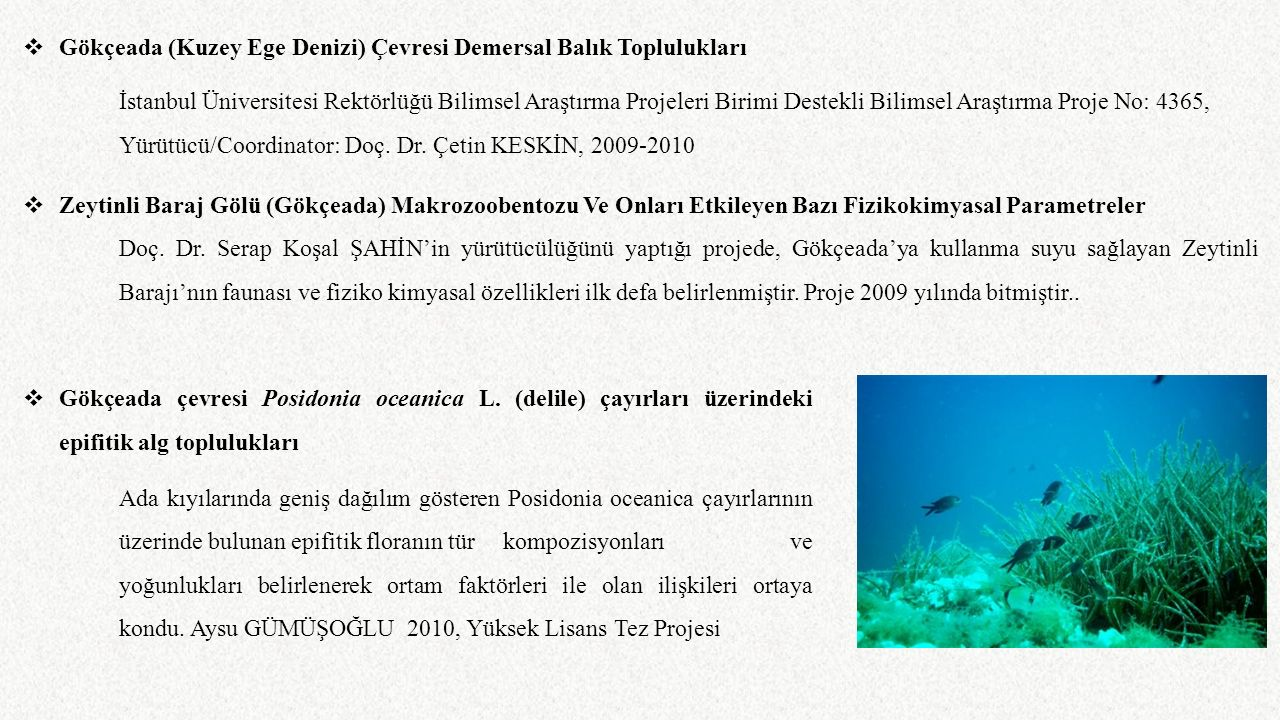 Gökçeada (Kuzey Ege Denizi) Çevresi Demersal Balık Toplulukları