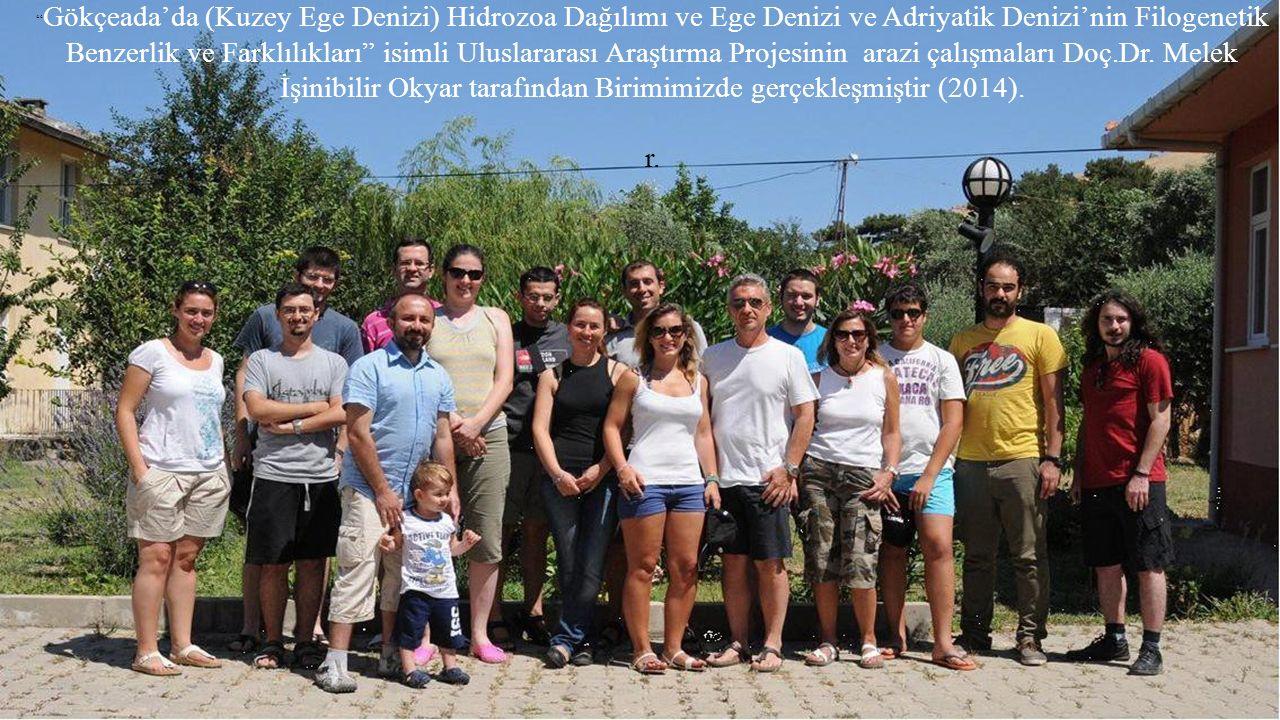 Gökçeada'da (Kuzey Ege Denizi) Hidrozoa Dağılımı ve Ege Denizi ve Adriyatik Denizi'nin Filogenetik Benzerlik ve Farklılıkları isimli Uluslararası Araştırma Projesinin arazi çalışmaları Doç.Dr. Melek İşinibilir Okyar tarafından Birimimizde gerçekleşmiştir (2014).