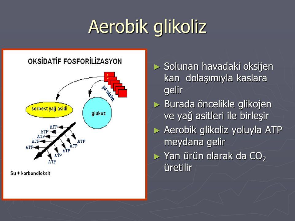 Aerobik glikoliz Solunan havadaki oksijen kan dolaşımıyla kaslara gelir. Burada öncelikle glikojen ve yağ asitleri ile birleşir.