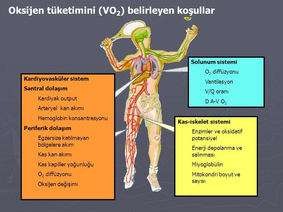 Oksijen tüketimini (VO2) belirleyen koşullar
