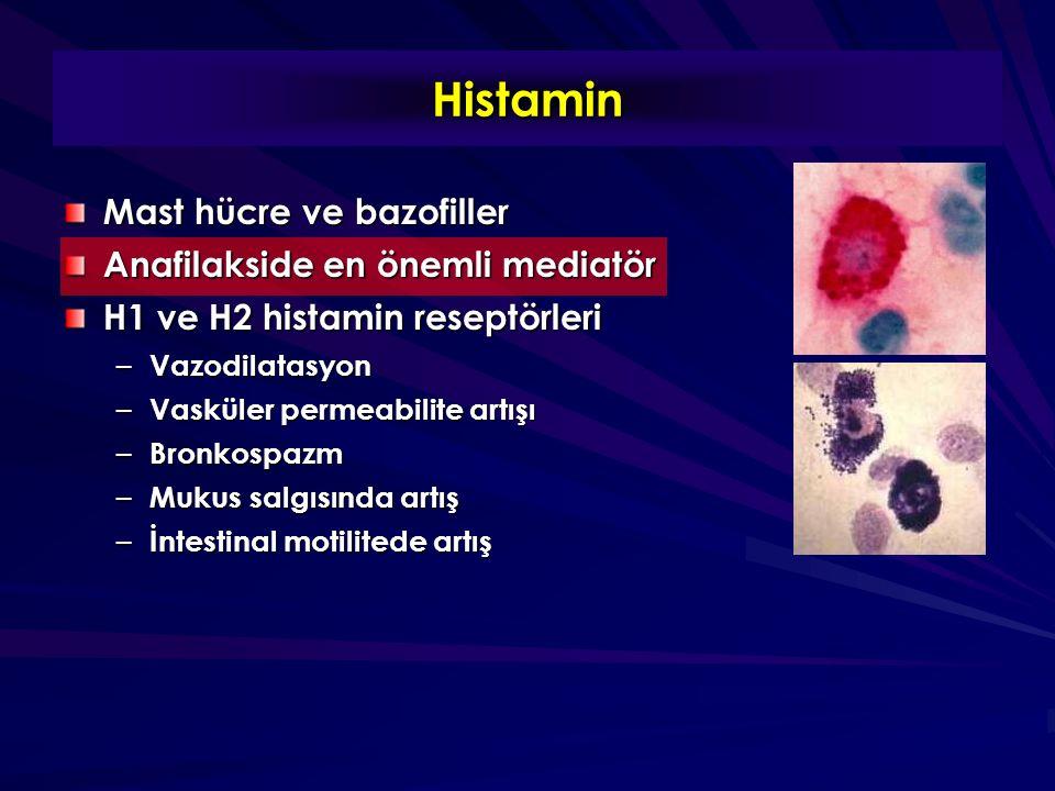 Histamin Mast hücre ve bazofiller Anafilakside en önemli mediatör