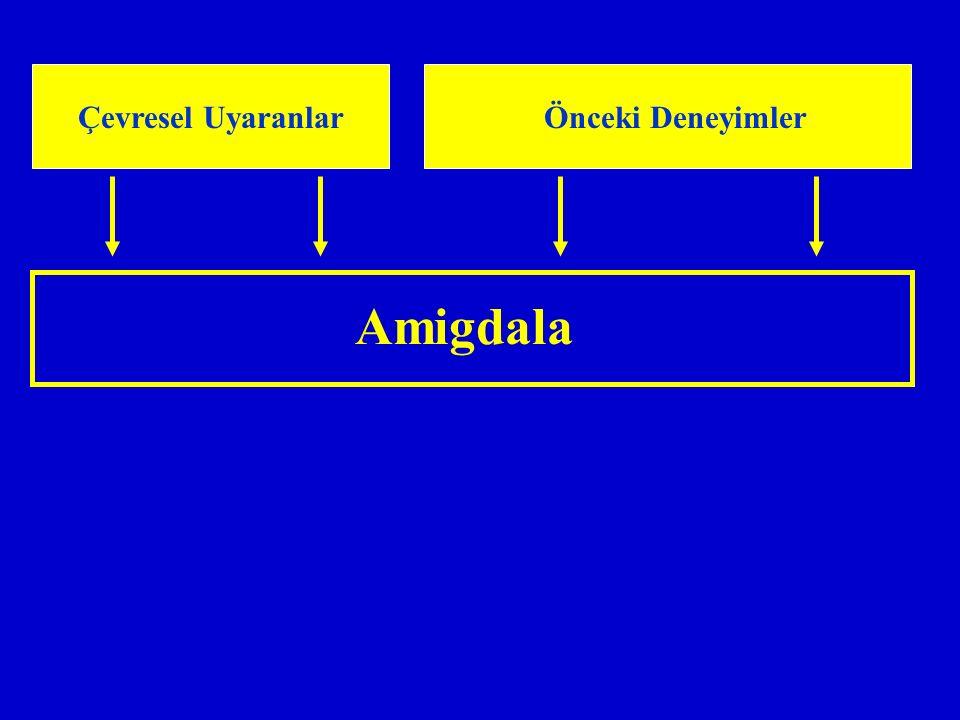 Çevresel Uyaranlar Önceki Deneyimler Amigdala