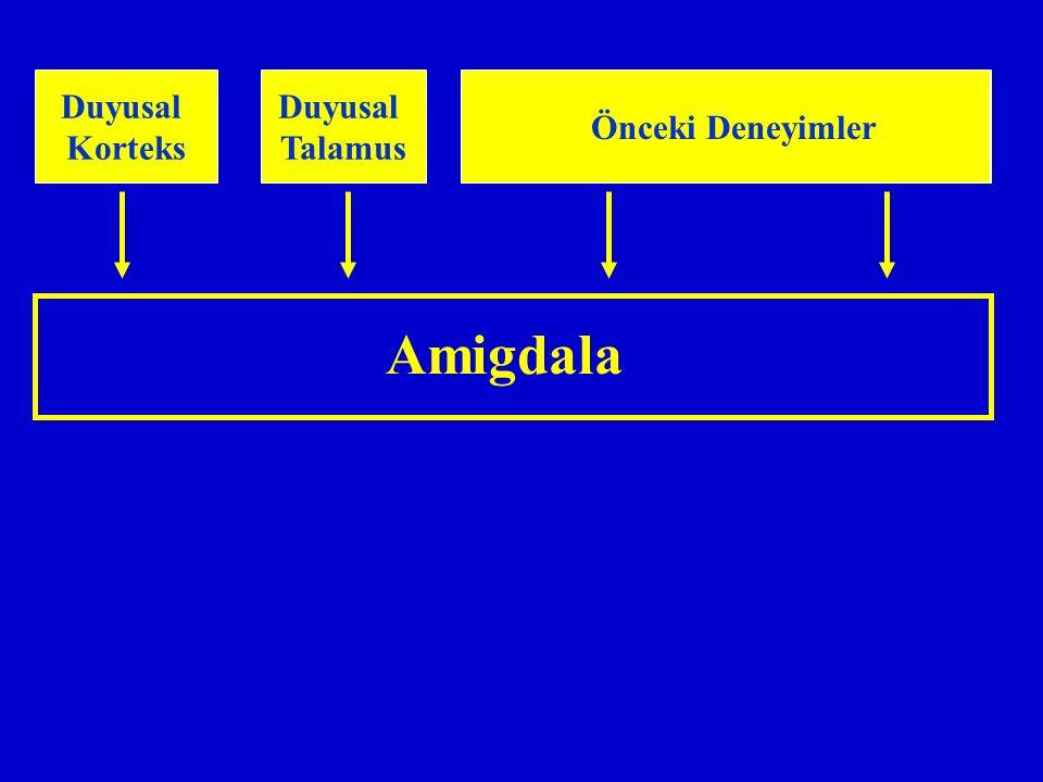 Amigdala Duyusal Korteks Duyusal Talamus Önceki Deneyimler