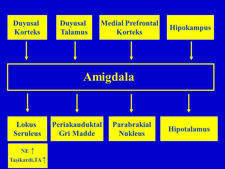 Amigdala Duyusal Korteks Duyusal Talamus Medial Prefrontal Korteks