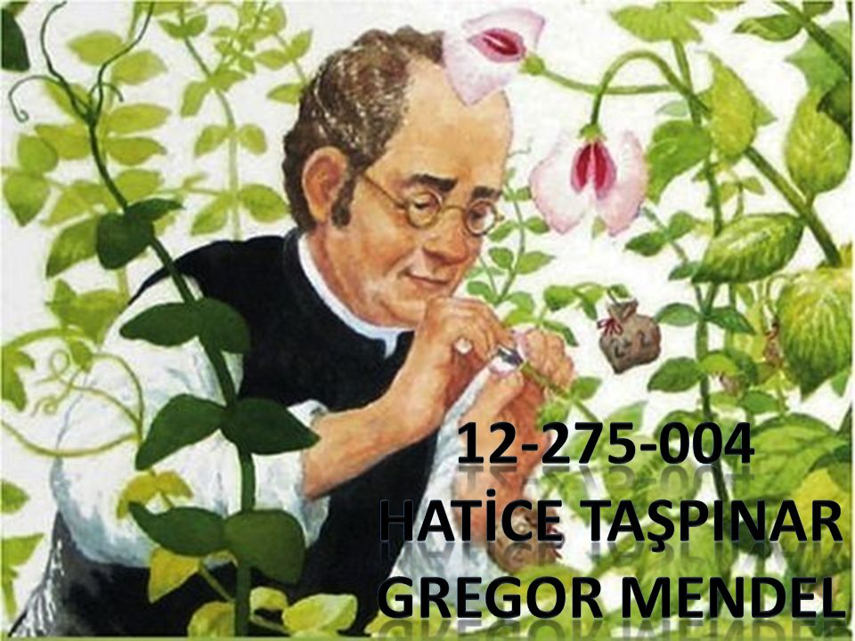 12-275-004 HATİCE TAŞPINAR GREGOR MENDEL
