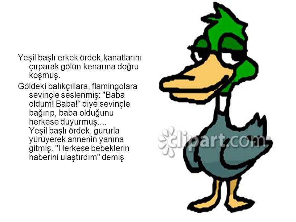 Yeşil başlı erkek ördek,kanatlarını çırparak gölün kenarına doğru koşmuş.
