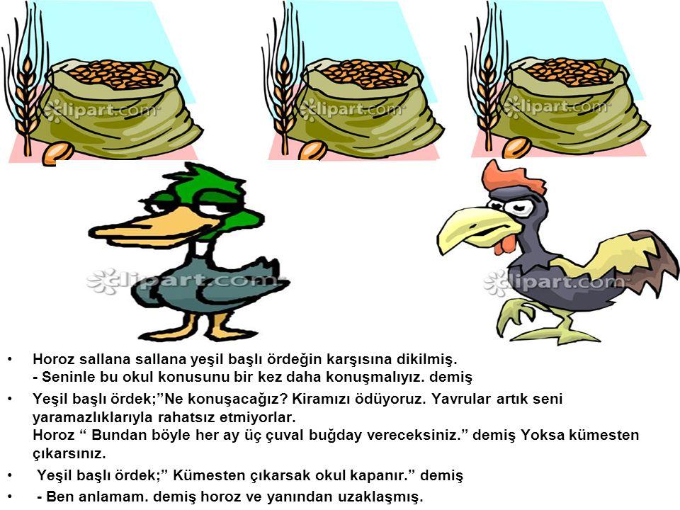 Horoz sallana sallana yeşil başlı ördeğin karşısına dikilmiş