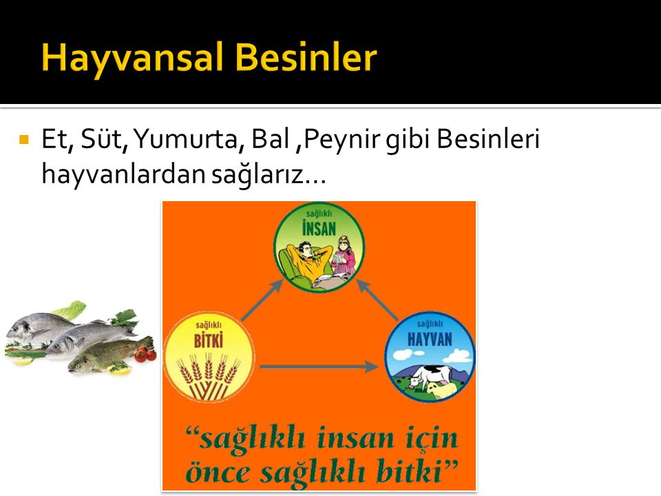 Hayvansal Besinler Et, Süt, Yumurta, Bal ,Peynir gibi Besinleri hayvanlardan sağlarız…