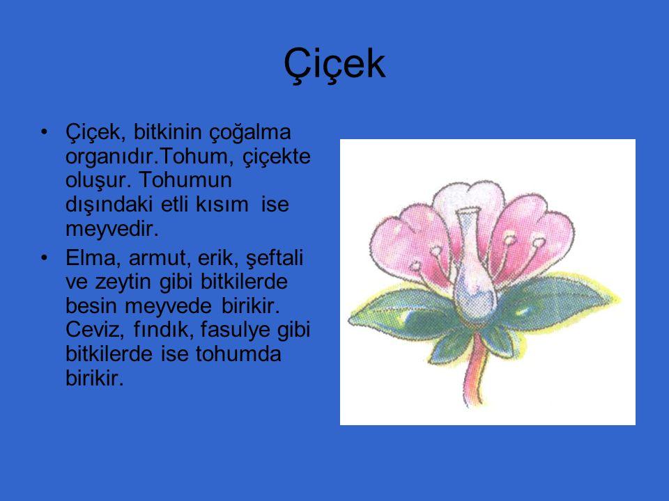Çiçek Çiçek, bitkinin çoğalma organıdır.Tohum, çiçekte oluşur. Tohumun dışındaki etli kısım ise meyvedir.
