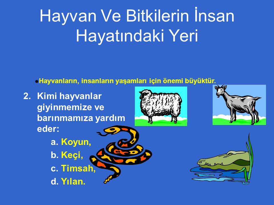 Hayvan Ve Bitkilerin İnsan Hayatındaki Yeri