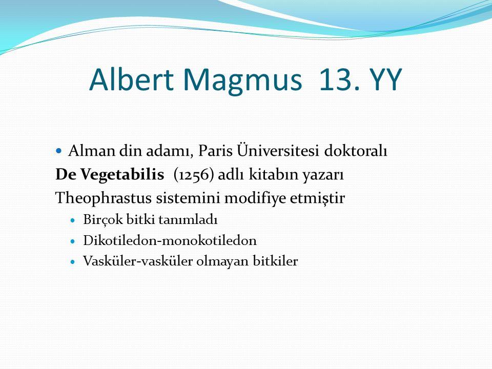 Albert Magmus 13. YY Alman din adamı, Paris Üniversitesi doktoralı