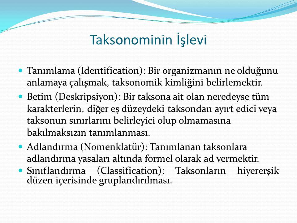 Taksonominin İşlevi Tanımlama (Identification): Bir organizmanın ne olduğunu anlamaya çalışmak, taksonomik kimliğini belirlemektir.