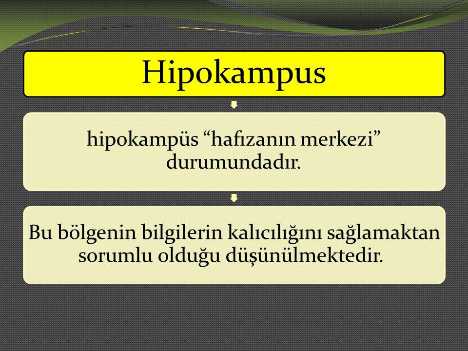 hipokampüs hafızanın merkezi durumundadır.