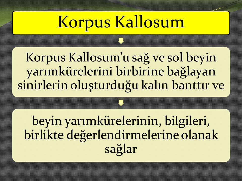 Korpus Kallosum Korpus Kallosum'u sağ ve sol beyin yarımkürelerini birbirine bağlayan sinirlerin oluşturduğu kalın banttır ve.