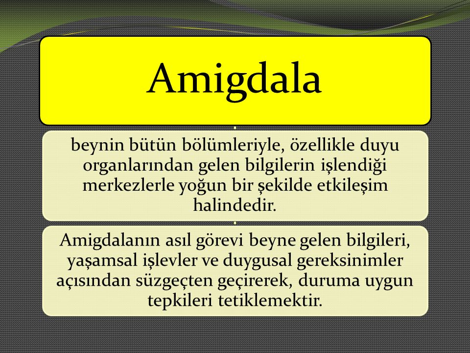 Amigdala beynin bütün bölümleriyle, özellikle duyu organlarından gelen bilgilerin işlendiği merkezlerle yoğun bir şekilde etkileşim halindedir.