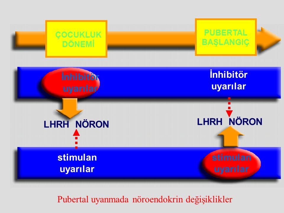 Pubertal uyanmada nöroendokrin değişiklikler