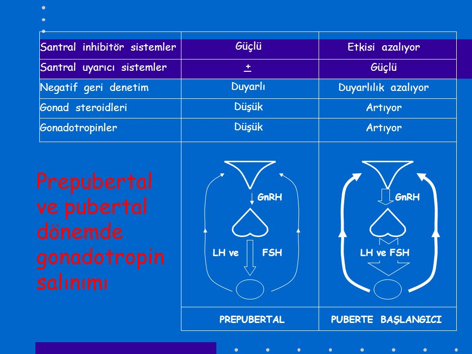 Prepubertal ve pubertal dönemde gonadotropin salınımı