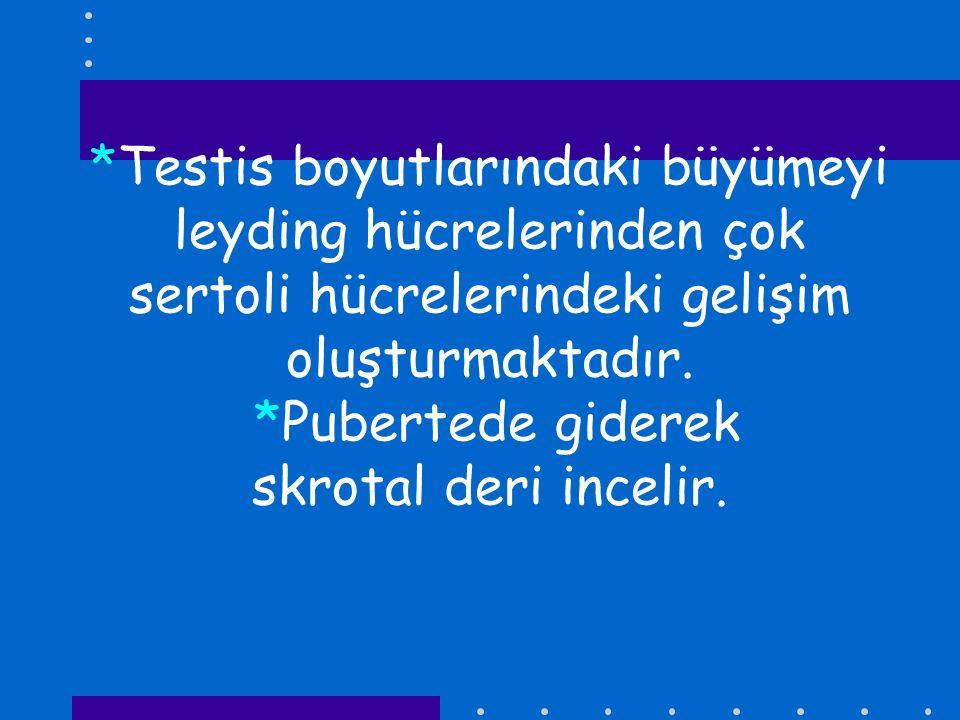 *Testis boyutlarındaki büyümeyi leyding hücrelerinden çok sertoli hücrelerindeki gelişim oluşturmaktadır.