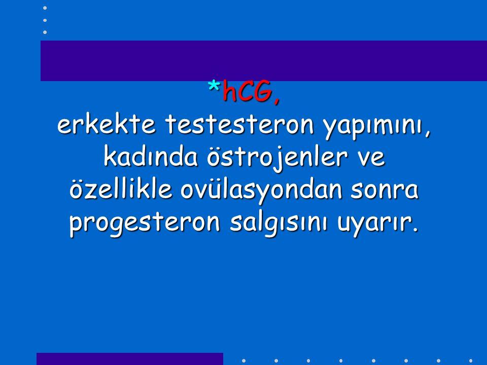 *hCG, erkekte testesteron yapımını, kadında östrojenler ve özellikle ovülasyondan sonra progesteron salgısını uyarır.