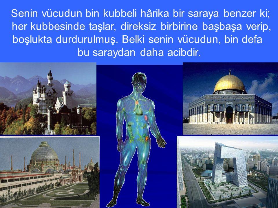 Senin vücudun bin kubbeli hârika bir saraya benzer ki;