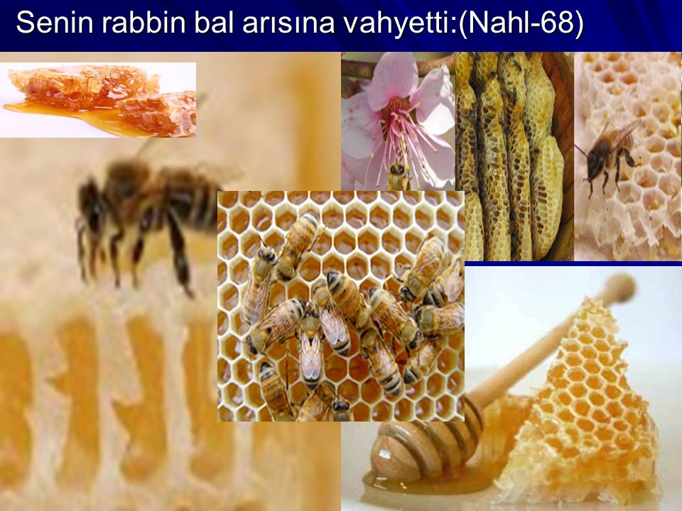 Senin rabbin bal arısına vahyetti:(Nahl-68)