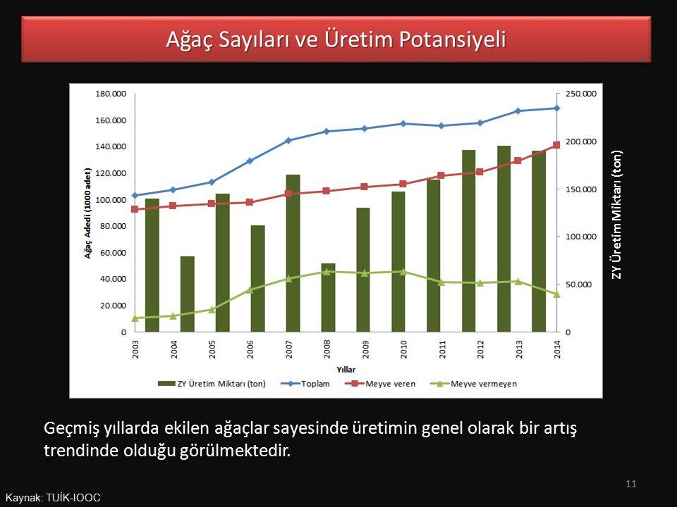Ağaç Sayıları ve Üretim Potansiyeli