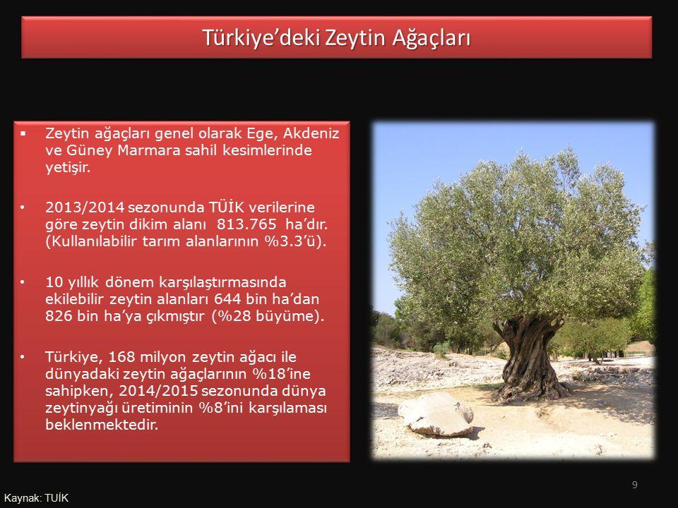 Türkiye'deki Zeytin Ağaçları