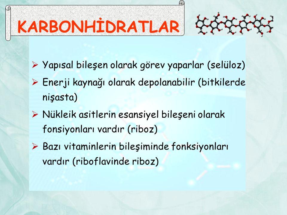 KARBONHİDRATLAR Yapısal bileşen olarak görev yaparlar (selüloz)