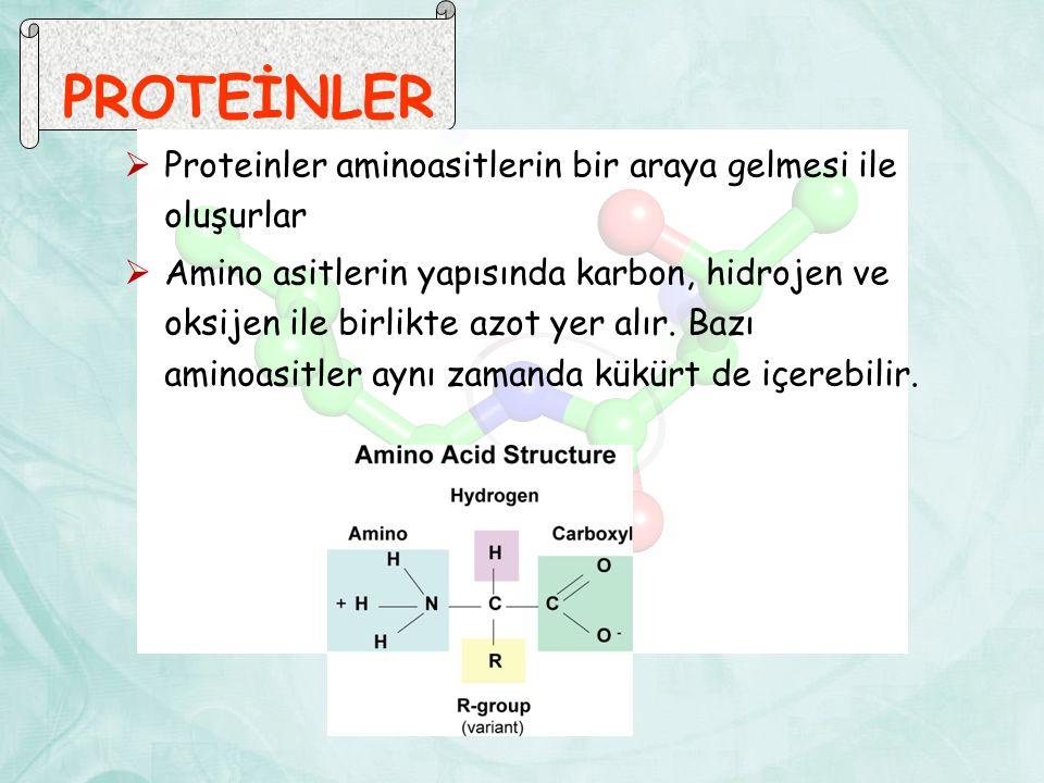 PROTEİNLER Proteinler aminoasitlerin bir araya gelmesi ile oluşurlar