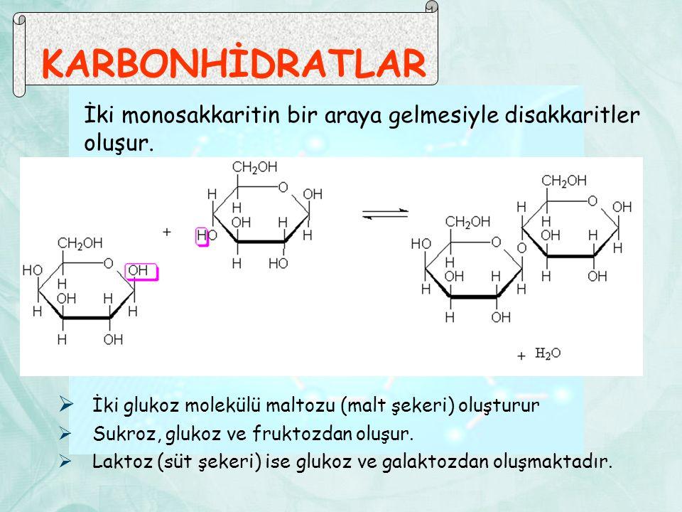 KARBONHİDRATLAR İki monosakkaritin bir araya gelmesiyle disakkaritler oluşur. İki glukoz molekülü maltozu (malt şekeri) oluşturur.