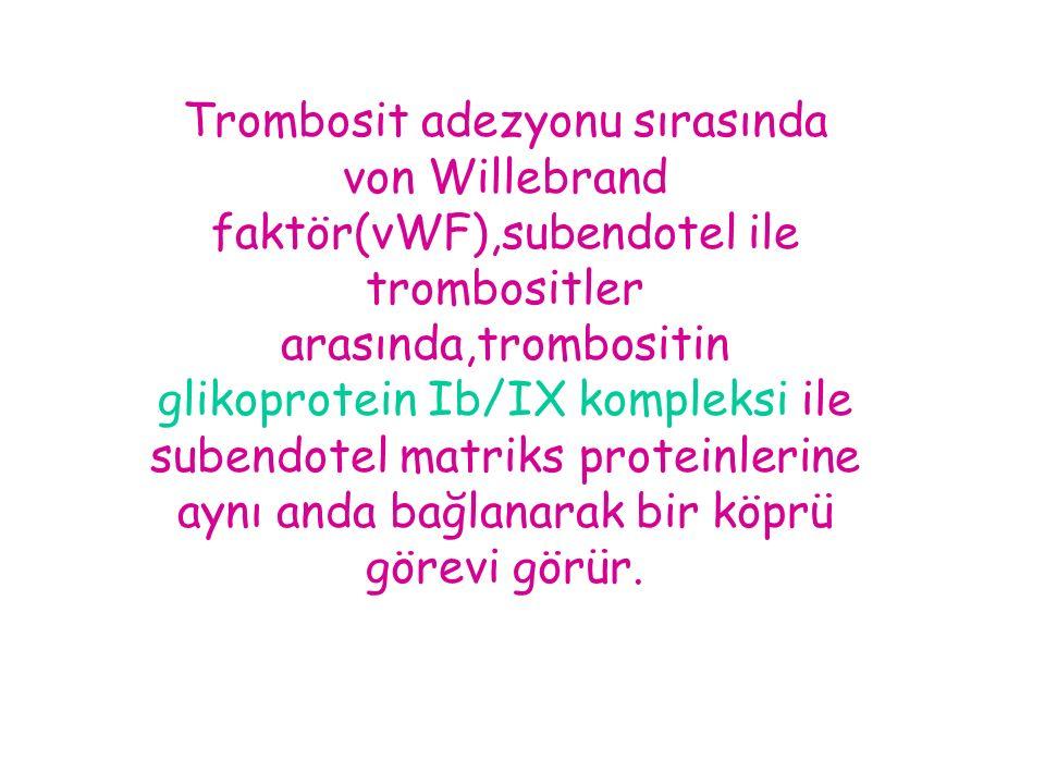 Trombosit adezyonu sırasında von Willebrand faktör(vWF),subendotel ile trombositler arasında,trombositin glikoprotein Ib/IX kompleksi ile subendotel matriks proteinlerine aynı anda bağlanarak bir köprü görevi görür.