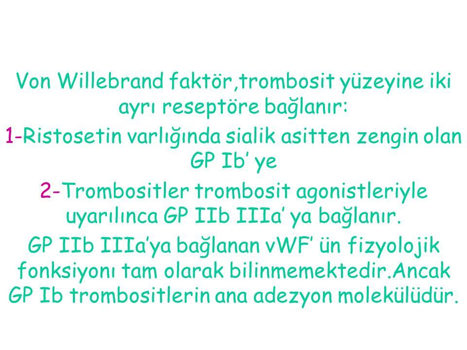 Von Willebrand faktör,trombosit yüzeyine iki ayrı reseptöre bağlanır: