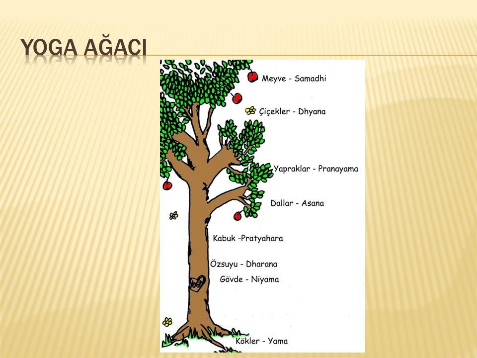 Yoga ağaci