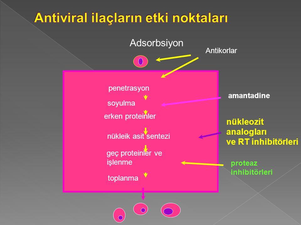 Antiviral ilaçların etki noktaları