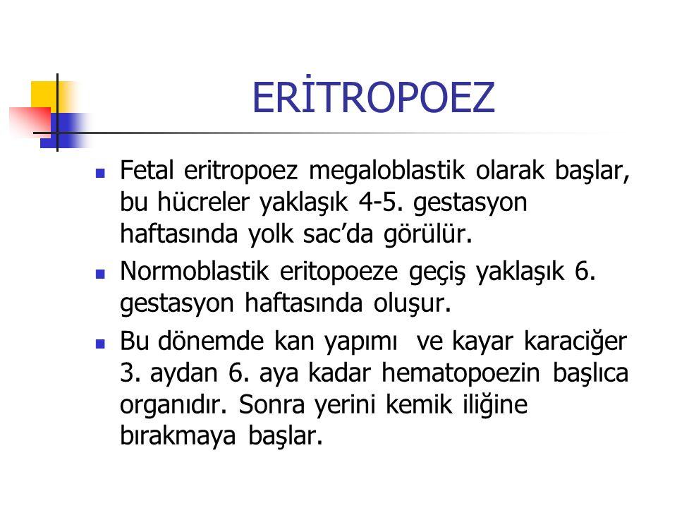 ERİTROPOEZ Fetal eritropoez megaloblastik olarak başlar, bu hücreler yaklaşık 4-5. gestasyon haftasında yolk sac'da görülür.