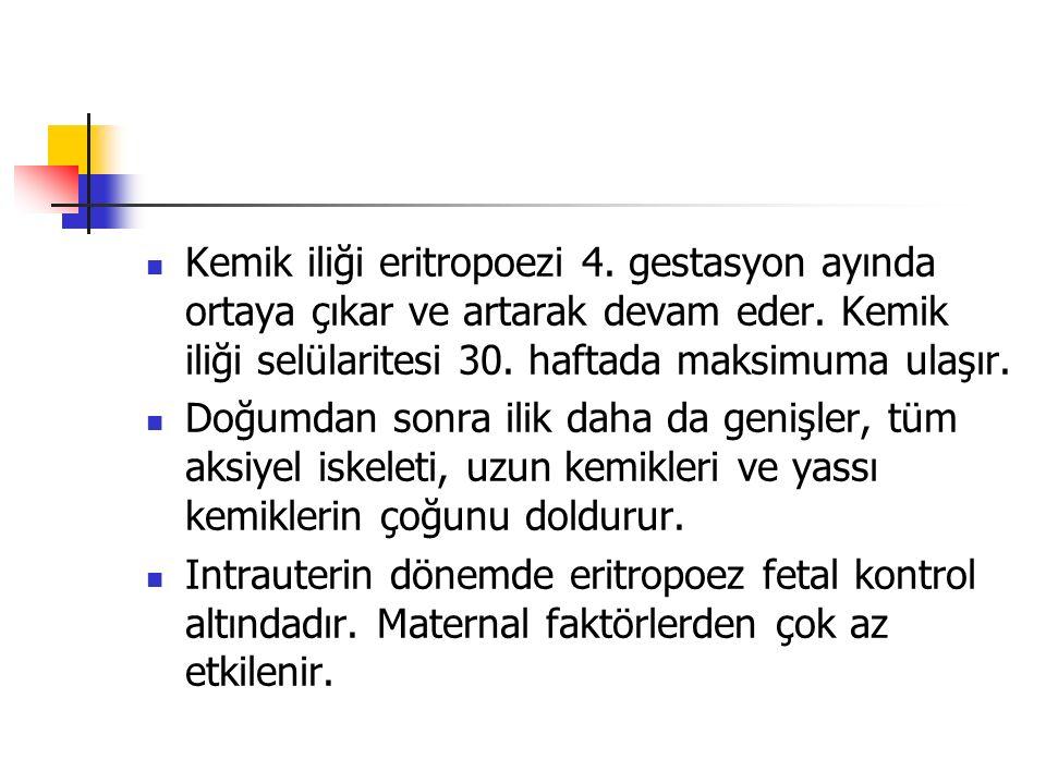 Kemik iliği eritropoezi 4