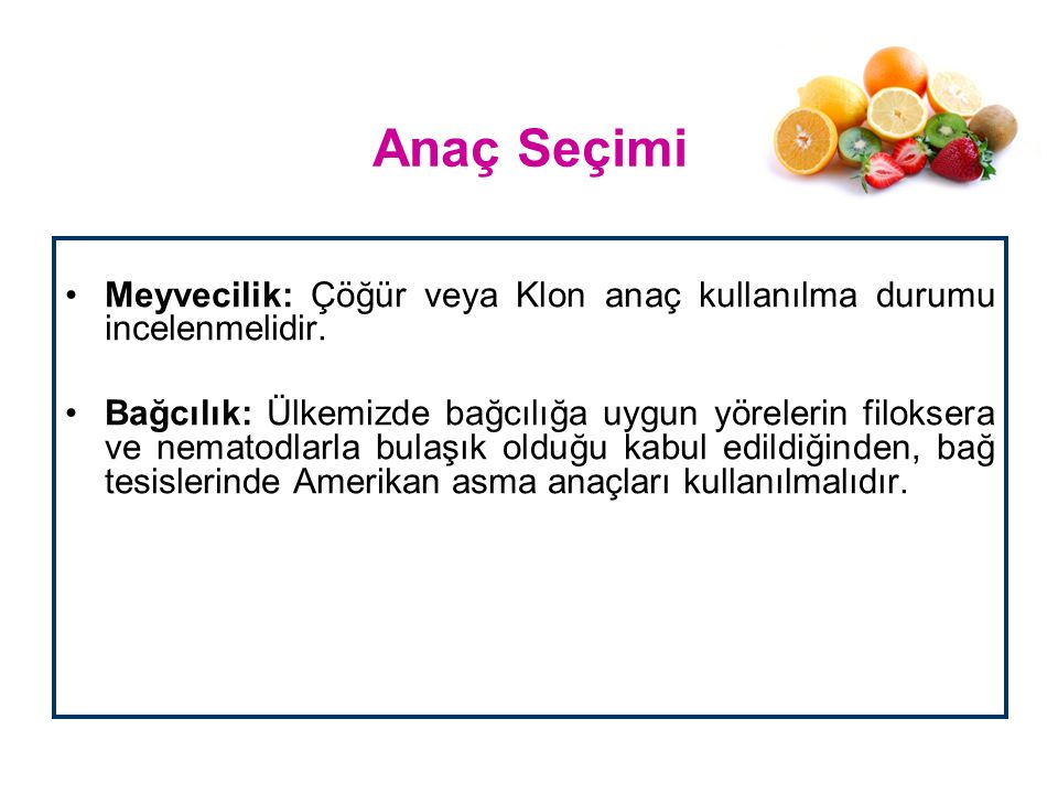 Anaç Seçimi Meyvecilik: Çöğür veya Klon anaç kullanılma durumu incelenmelidir.