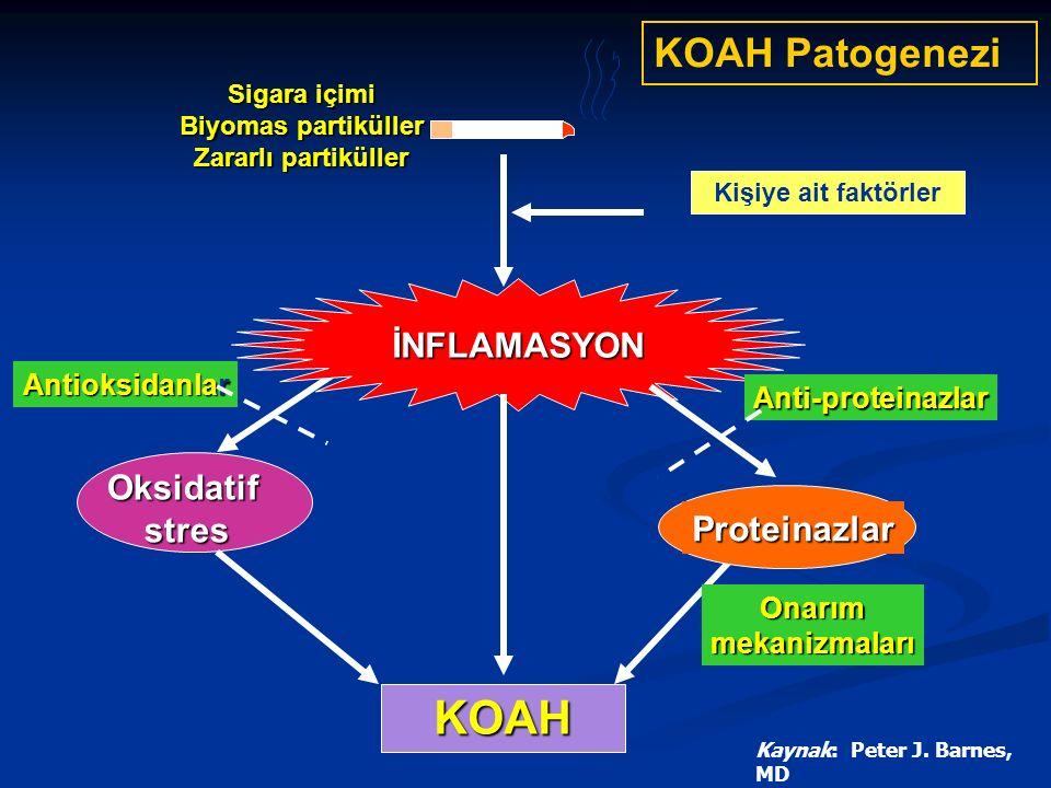 KOAH KOAH Patogenezi İNFLAMASYON Oksidatif stres Proteinazlar