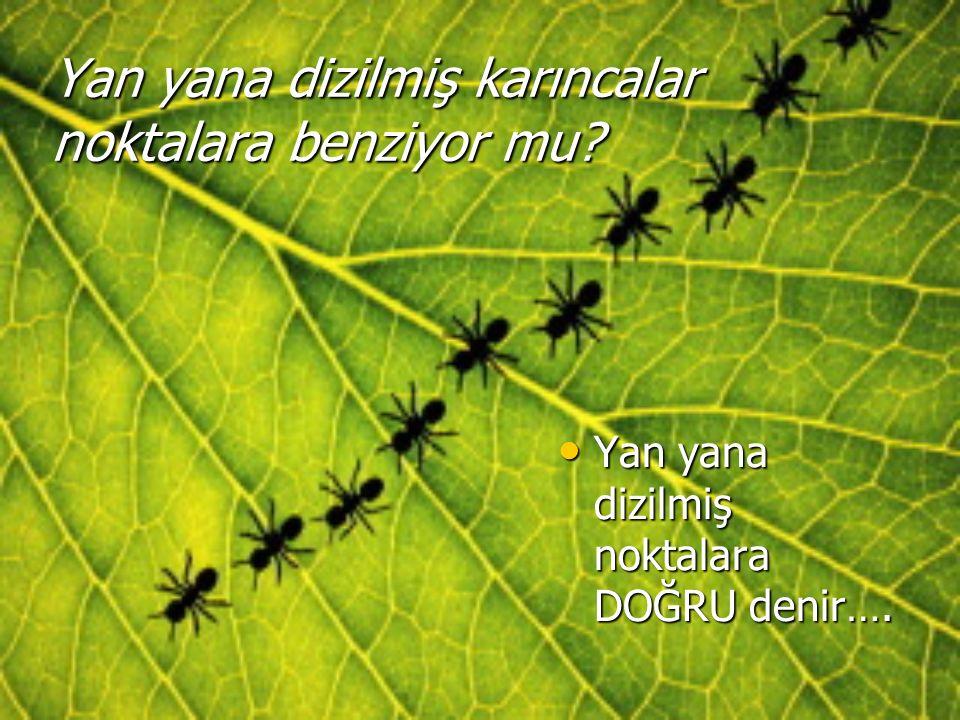 Yan yana dizilmiş karıncalar noktalara benziyor mu